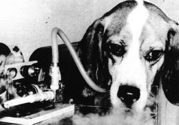 """performing experiments on animals Animals, science, and society  just as the populace disagreed about the role of animal experiments in the """"new science"""" so did the scientists themselves."""