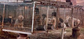 Law On Breeding Dogs